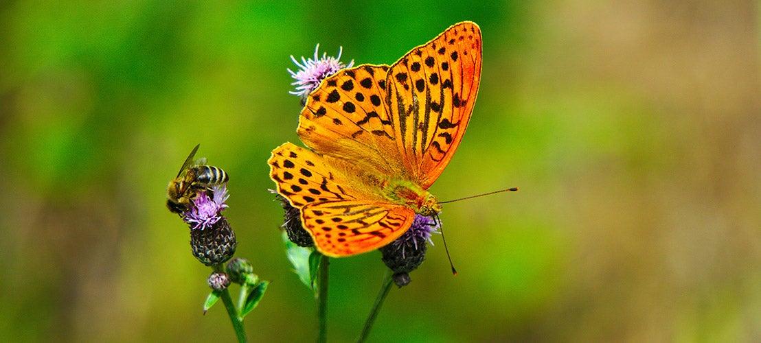 Bij en vlinder