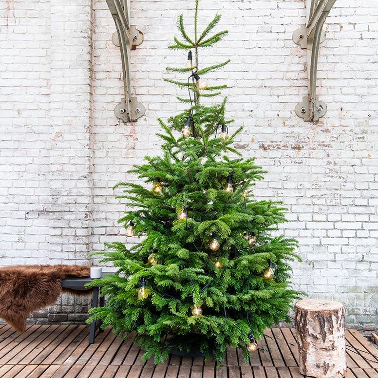 Kerstboomverlichting voor buiten