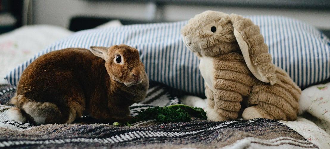 Konijn op bed met speelgoedkonijn