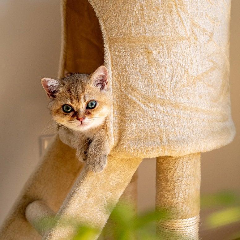 Krabpaal met kattenhuisje