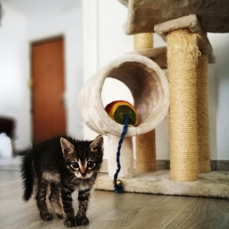 Kitten bij krabpaal