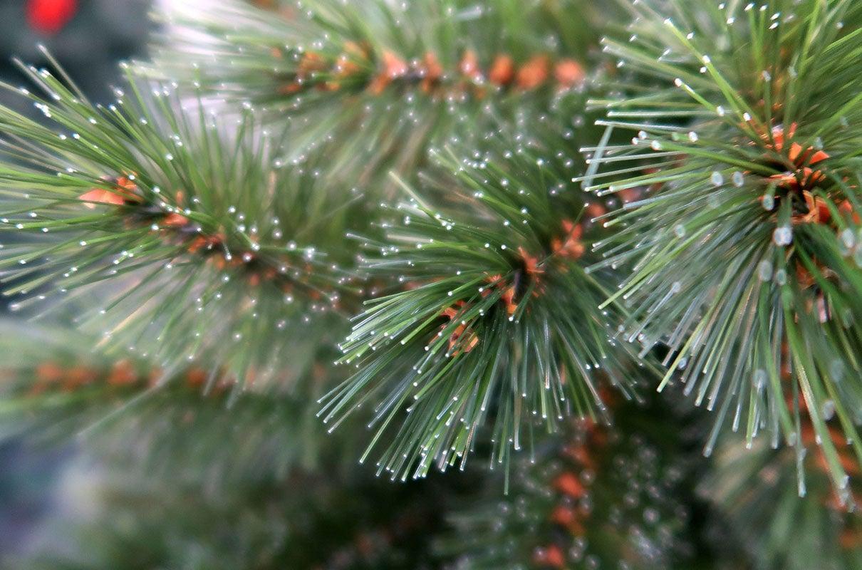 Kunstkerstboom Dikke tak (Pinus)