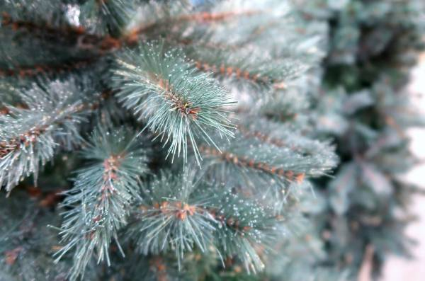 Blauwgroene kunstkerstboom