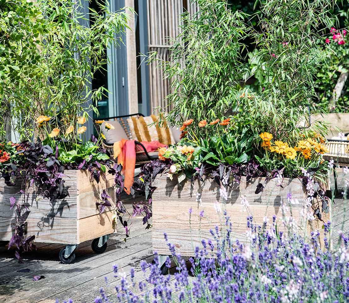 Zonnige tuin in juli