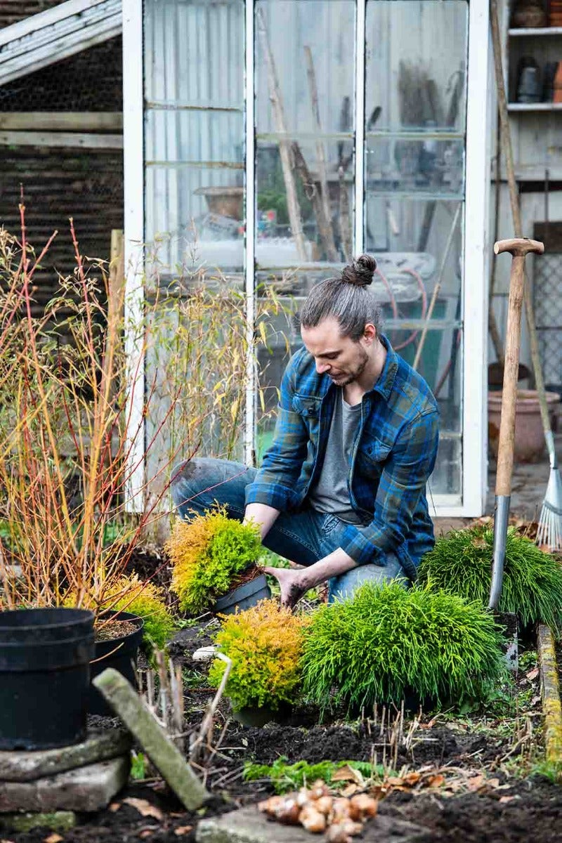 man plant tuinplanten