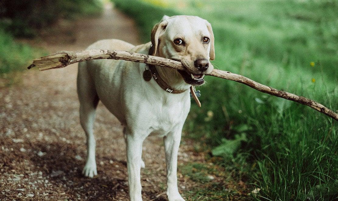 Hond met stok buiten