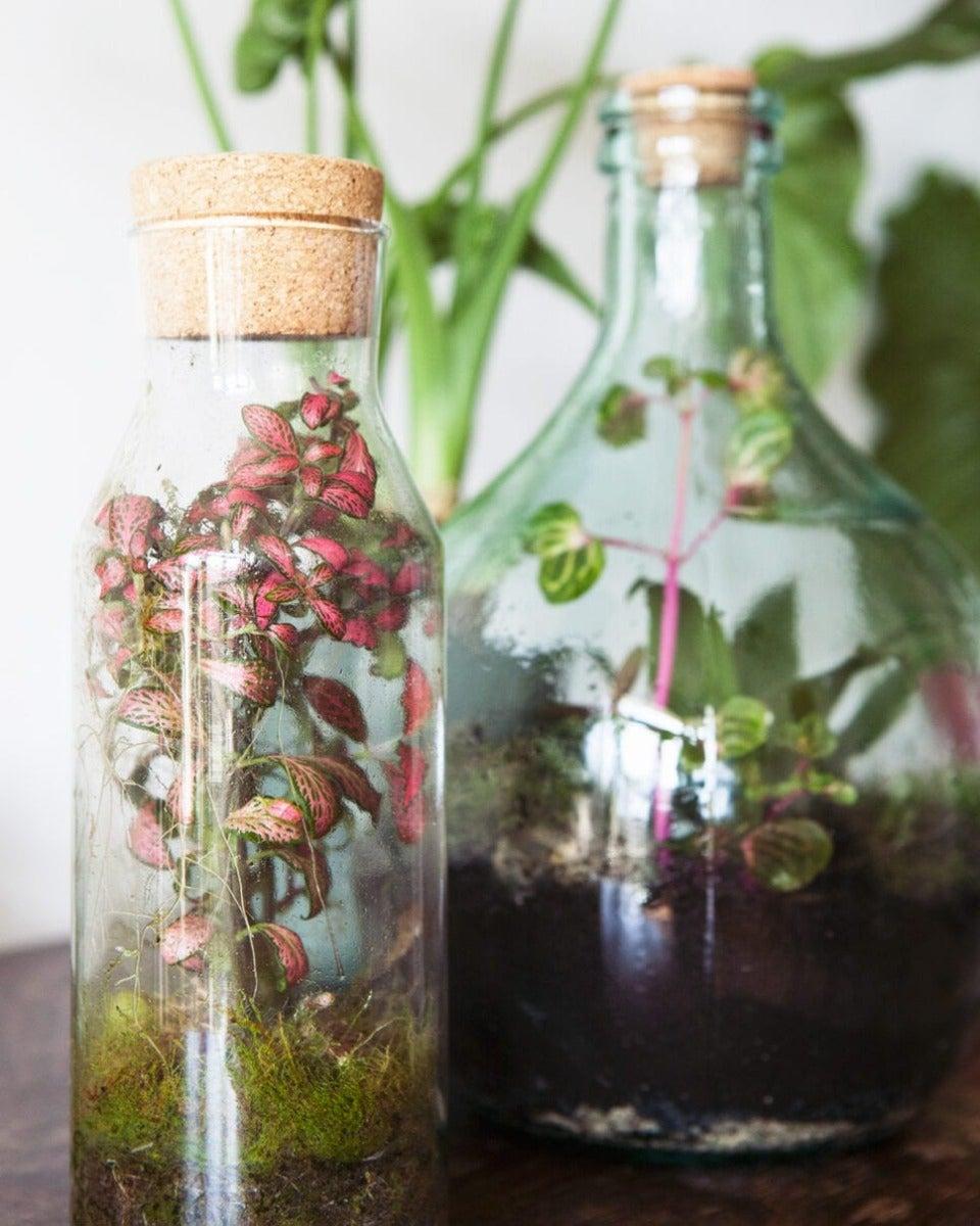 Terrarium in fles