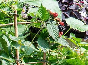 Fruitzaden