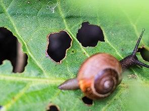 Plantenbescherming