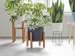 Plantenstandaarden