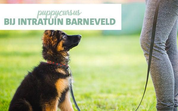  Intratuin Puppycursus!