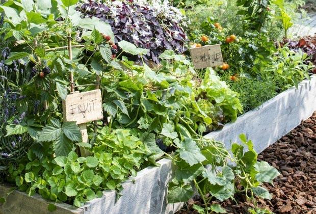 Groente- en kruidenborder aanleggen
