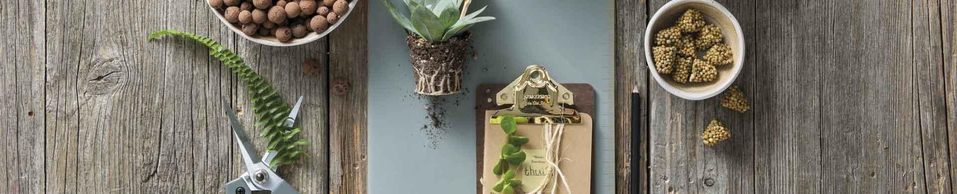 Kamerplanten verzorging