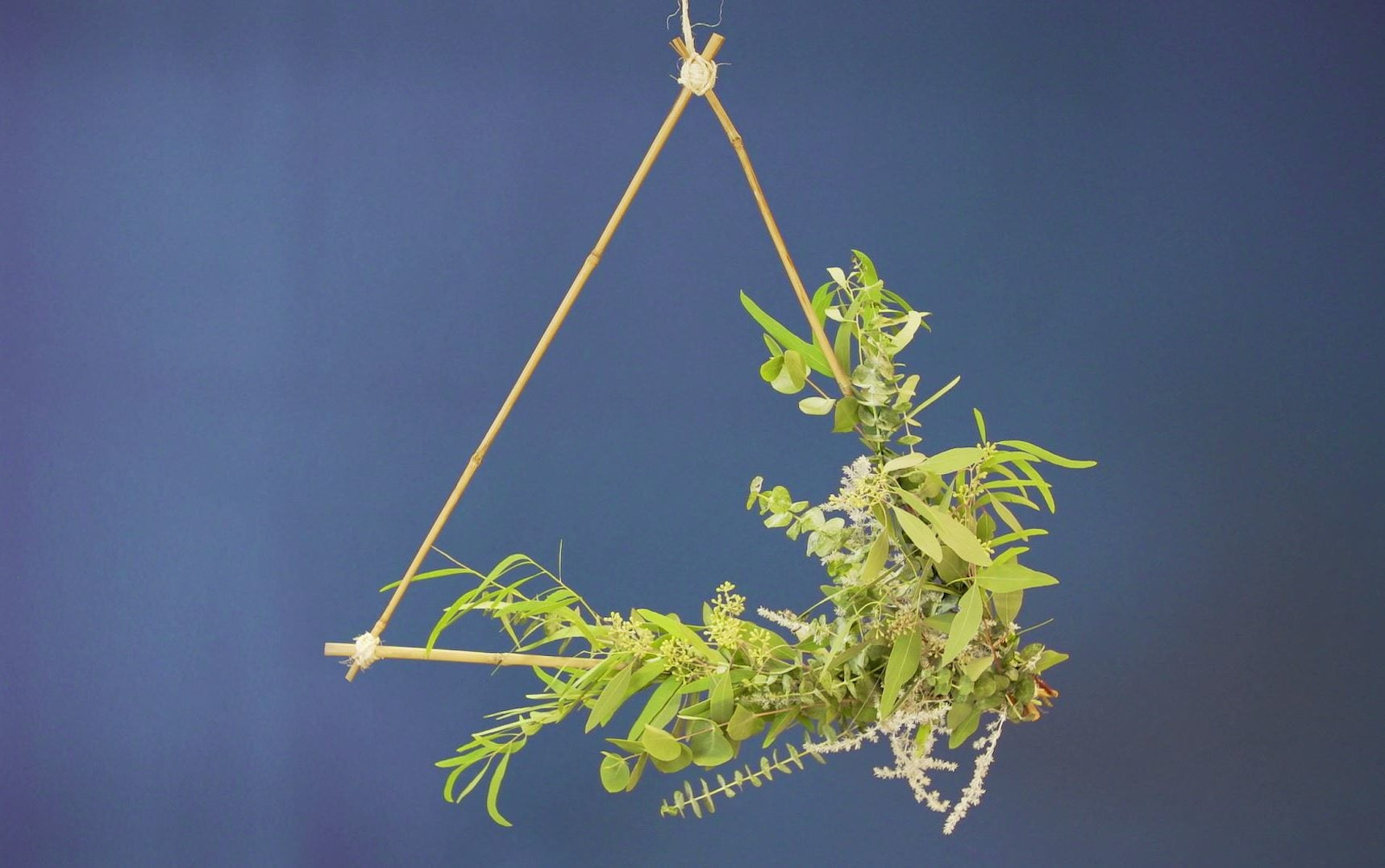 Eucalyptus driehoek