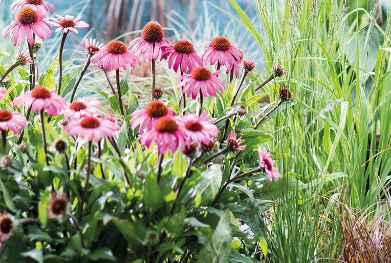 border-zonnige-tuin